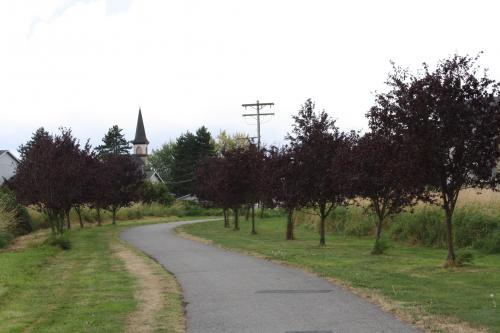 Plum Trees in Heritage Park next to the trail